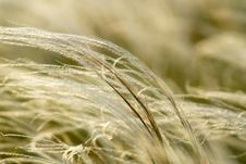Free Feather-grass Stock Images - 2602084