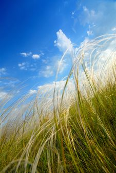 Free Feather-grass Stock Photo - 2602140