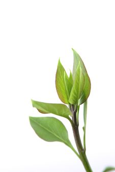 Free Green Leaves Stock Photos - 2603293