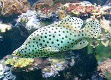 Free Tropical Fish 12 Stock Image - 2604971