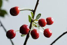 Free Sour Cherries Stock Photos - 2605353