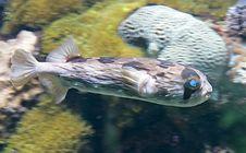 Free Tropical Fish 16 Stock Image - 2605981