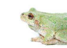 Free Frog Macro Profile Royalty Free Stock Photo - 2607145