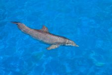 Dolphin Swim Stock Image