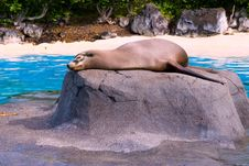 Free Sea Lion Sunbath Stock Photo - 2607210