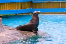 Free Sea Lion King Royalty Free Stock Photo - 2607215