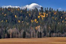 Free Autumn Grove. Royalty Free Stock Photos - 2608268