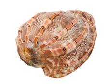 Free Close-up Of Sea Shell Cutout Stock Photo - 2608470