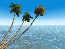 Free Palms On An Exotic Tropical Be Stock Photos - 2609623