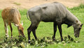 Free Wild Deers Stock Image - 26008381