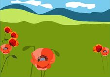 Free Red Poppy On The Meadows Royalty Free Stock Photography - 26003097
