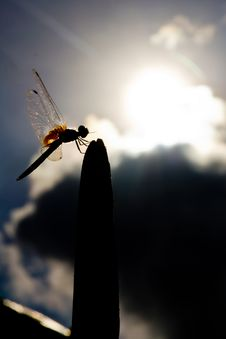 Free Dragonfly Stock Photography - 26003342