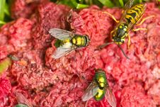 Free Fly And Wasp On Red Stock Photography - 26004512