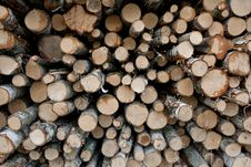 Free Pile Of Logs Royalty Free Stock Image - 26005686