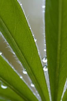 Waterdrops On Leaves Royalty Free Stock Photo
