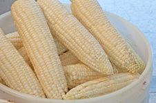 Free Fresh Picked Corn In A Bucket Royalty Free Stock Photo - 26006855