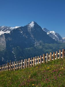 Free Meadow With Flowers In Front Of The Eiger Royalty Free Stock Photography - 26006857