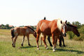 Free Horses Stock Images - 26014054