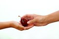 Free Plum From Hand Stock Images - 26017894
