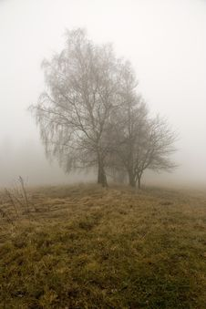 Birch In The Fog Royalty Free Stock Photos