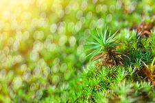 Free Green Grass Background Royalty Free Stock Photography - 26015737