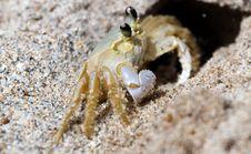 Free Sand Crab Royalty Free Stock Image - 26016496