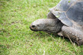 Free Tortoise On Grass Stock Image - 26031171
