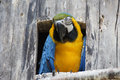 Free Colorful Parrot Bird Stock Photo - 26035760