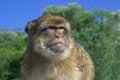 Free Monkey Stock Image - 26037301