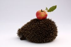 Hedgehog With Apple Royalty Free Stock Photography