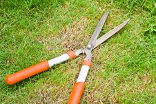 Free Scissors Cut The Orange Grass Royalty Free Stock Photography - 26033577