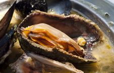 Free Adriatic Mussels Clouse -up Stock Photos - 26035363