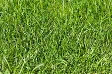 Free Water Droplets On Green Grass Stock Photo - 26037460