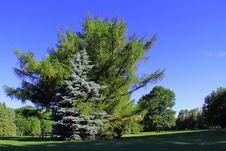 Free Hugging Trees Stock Image - 26037921