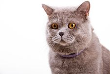 Free Cat Royalty Free Stock Images - 26040169