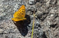 Free Orange Butterfly Royalty Free Stock Photos - 26040298