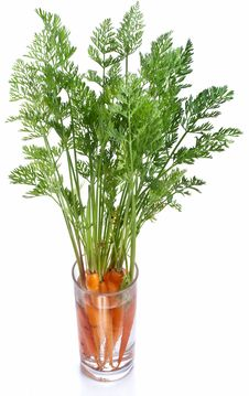 Free Carrots With Leaves Stock Photo - 26041910