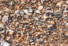 Free A Background Made Of Seashells. Royalty Free Stock Photography - 26045277