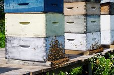 Free Beehives Royalty Free Stock Photos - 26055568