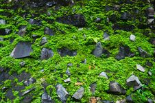 Free Green Moss Background Stock Image - 26056911