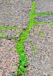 Free Green Grasses On Porous Rock Floor Stock Photo - 26057970