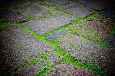 Free Green Grasses On Porous Rock Floor Royalty Free Stock Images - 26059539