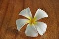 Free Frangipani Flower Stock Photography - 26065162