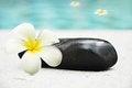 Free Frangipani Flower And Stone Royalty Free Stock Photo - 26065245