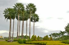 Free The Palm Trees  In Green Garden Royalty Free Stock Photography - 26060057