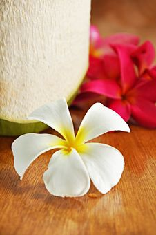 Free Frangipani Flower Stock Photography - 26065142