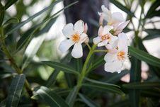 Free Flower Stock Photos - 26065703