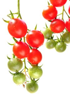 Free Cherry Tomatoes Stock Photos - 26069393