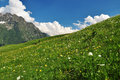 Free Alpine Meadow And Flowers, Aosta Valley, Italy Stock Images - 26073494