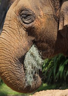 Free Elephant Stock Images - 26072824